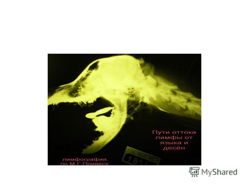 Привес Михаил Григорьевич (1904- 2000) 1-й Ленинградский мед. ин-т Первый курс лекций по рентгенененоанатомии. (1934 г. в ж. «Вестник рентгенененологии опубликовал «Программу преподавания рентгенененоанатомии на кафедре нормальной анатомии» - 9 лекци
