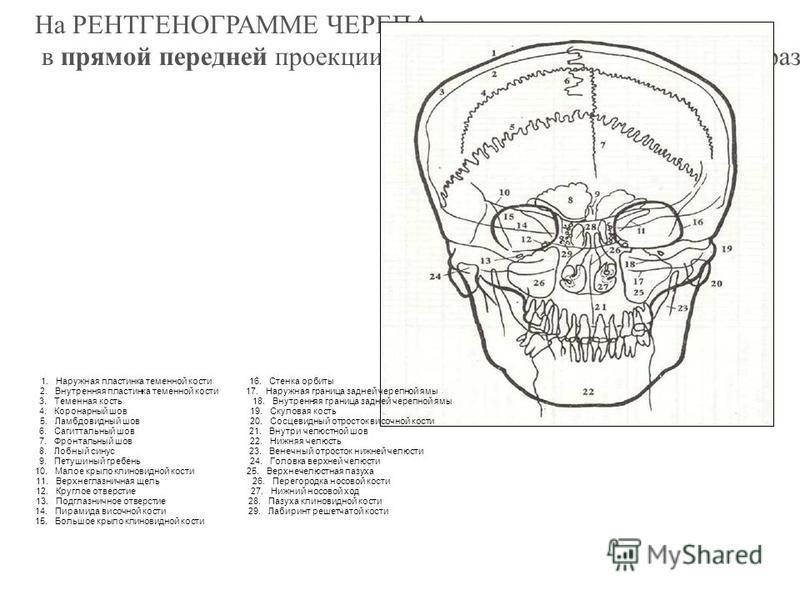 РЕНТГЕНОАНАТОМИЯ КОСТЕЙ На R выявляется только минерально пропитанный остов кости («скелет скелета»), а не изображение всей кости как органа. Очень слабо поглощают Х-лучи и не дают дифференцированной тени: периост, костный мозг, суставные хрящи; связ