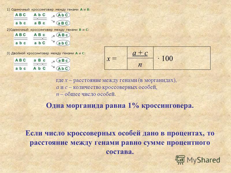 Одна морганида равна 1% кроссинговера. Если число кроссоверных особей дано в процентах, то расстояние между генами равно сумме процентного состава. x = a + c · 100 n где x – расстояние между генами (в морганидах), а и с – количество кроссоверных особ