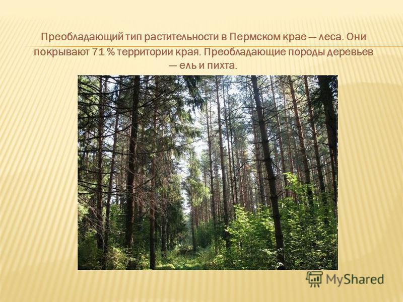 Преобладающий тип растительности в Пермском крае леса. Они покрывают 71 % территории края. Преобладающие породы деревьев ель и пихта.