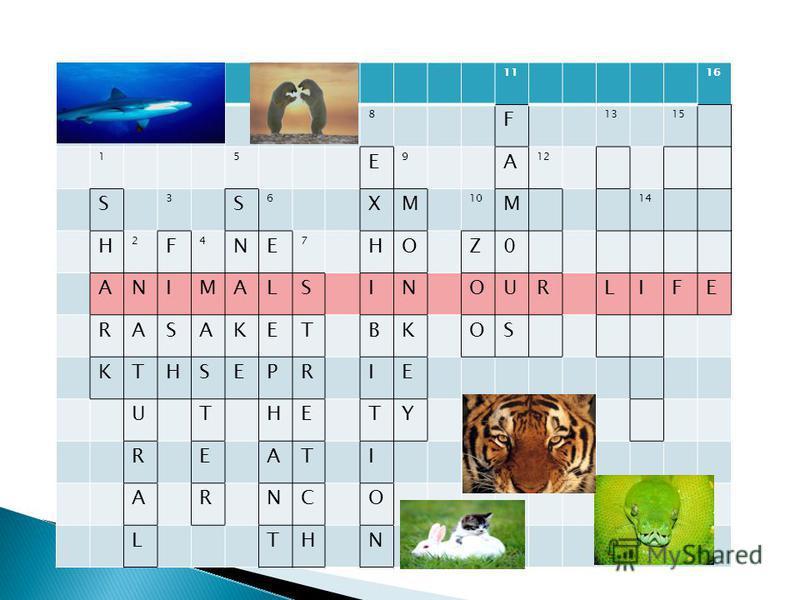 1116 8 F 1315 15 E 9 A 12 S 3 S 6 XM 10 M 14 H 2 F 4 NE 7 HOZ0 ANIMALSINOURLIFE RASAKETBKOS KTHSEPRIE UTHETY REATI ARNCO LTHN