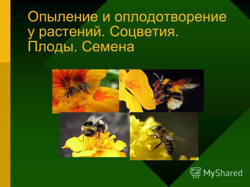 Опыление и оплодотворение у растений. Соцветия. Плоды. Семена