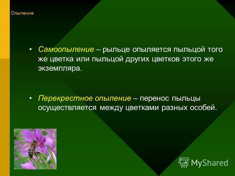 Самоопыление – рыльце опыляется пыльцой того же цветка или пыльцой других цветков этого же экземпляра. Перекрестное опыление – перенос пыльцы осуществляется между цветками разных особей. Опыление