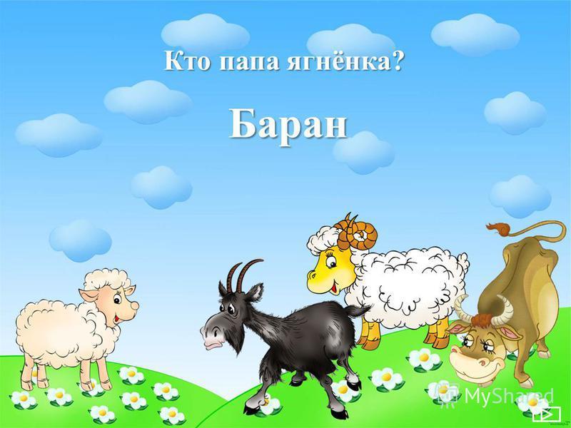 Кто папа ягнёнка? Баран
