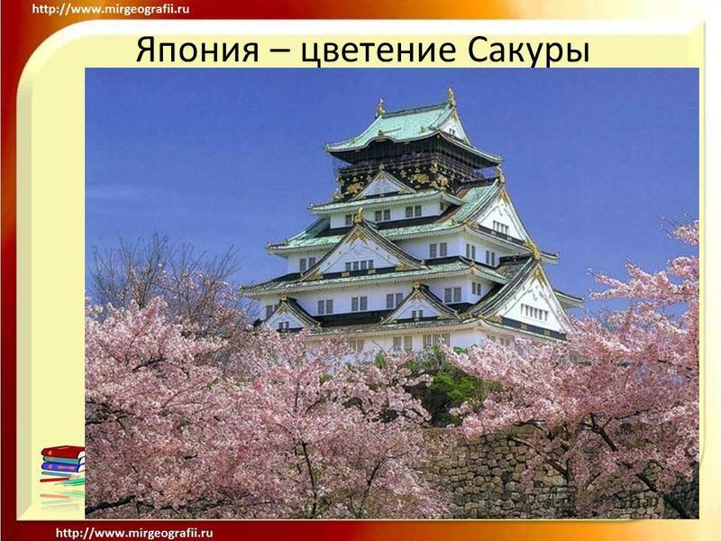 Япония – цветение Сакуры