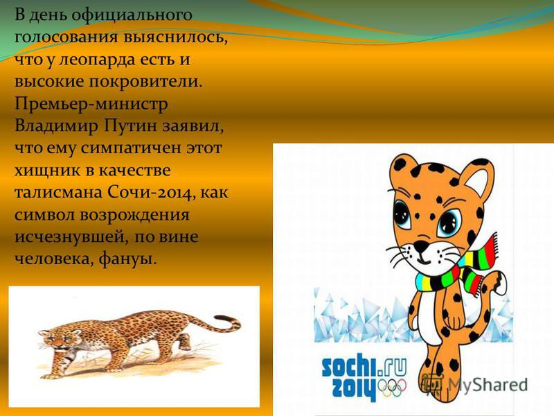 В день официального голосования выяснилось, что у леопарда есть и высокие покровители. Премьер-министр Владимир Путин заявил, что ему симпатичен этот хищник в качестве талисмана Сочи-2014, как символ возрождения исчезнувшей, по вине человека, фауны.