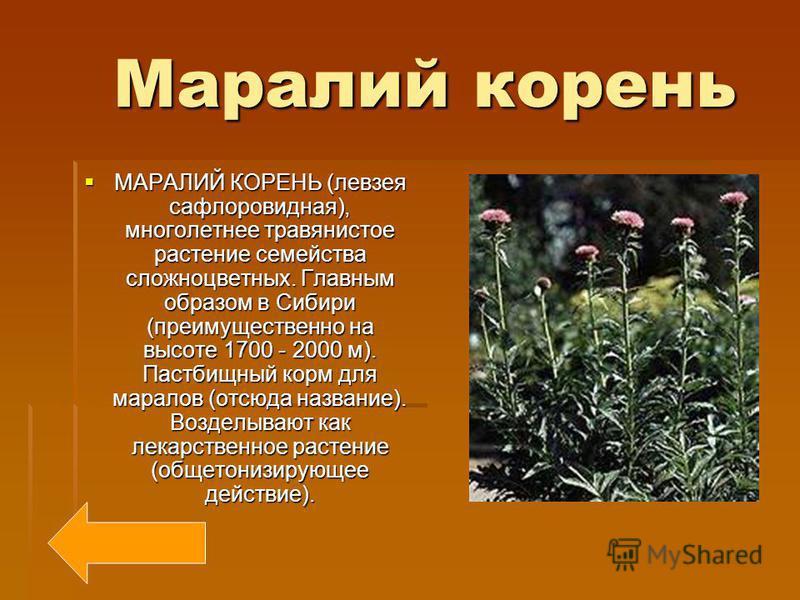 Шиповник Шиповник ШИПОВНИК, дикорастущие виды розы, обычно с немахровыми цветками. Распространены в Северном полушарии. Плоды используют как витаминное сырье (главным образом витамин С). Декоративные растения. ШИПОВНИК, дикорастущие виды розы, обычно