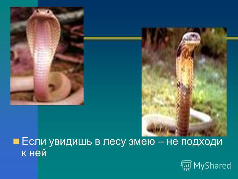 Если увидишь в лесу змею – не подходи к ней