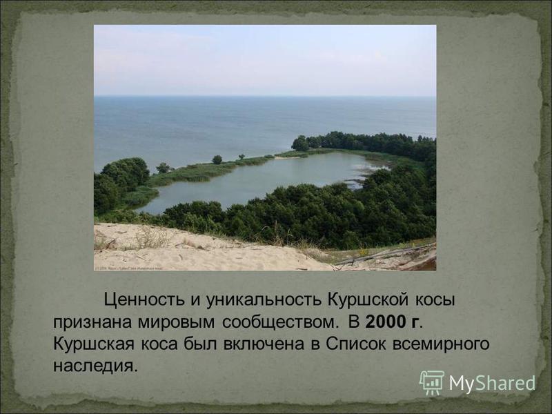 Ценность и уникальность Куршской косы признана мировым сообществом. В 2000 г. Куршская коса был включена в Список всемирного наследия.