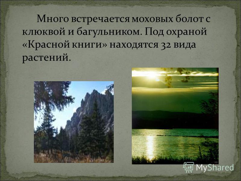Много встречается моховых болот с клюквой и багульником. Под охраной «Красной книги» находятся 32 вида растений.