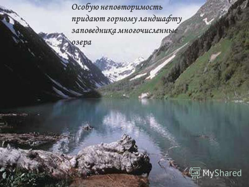 Особую неповторимость придают горному ландшафту заповедника многочисленные озера