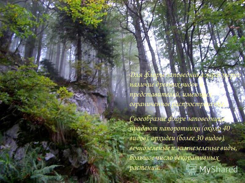 Для флоры заповедника характерно наличие древних видов и представителей, имеющих ограниченное распространение. Своеобразие флоре заповедника придают папоротники (около 40 видов), орхидеи (более 30 видов), вечнозеленые и зимнезеленые виды, большое чис