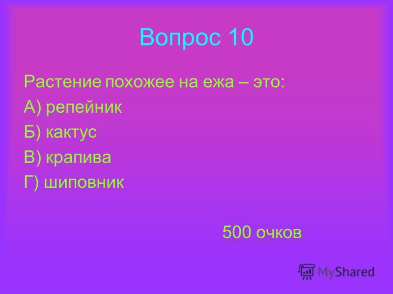 Вопрос 10 Растение похожее на ежа – это: А) репейник Б) кактус В) крапива Г) шиповник 500 очков