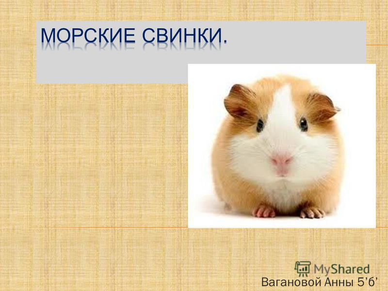 Вагановой Анны 5 б