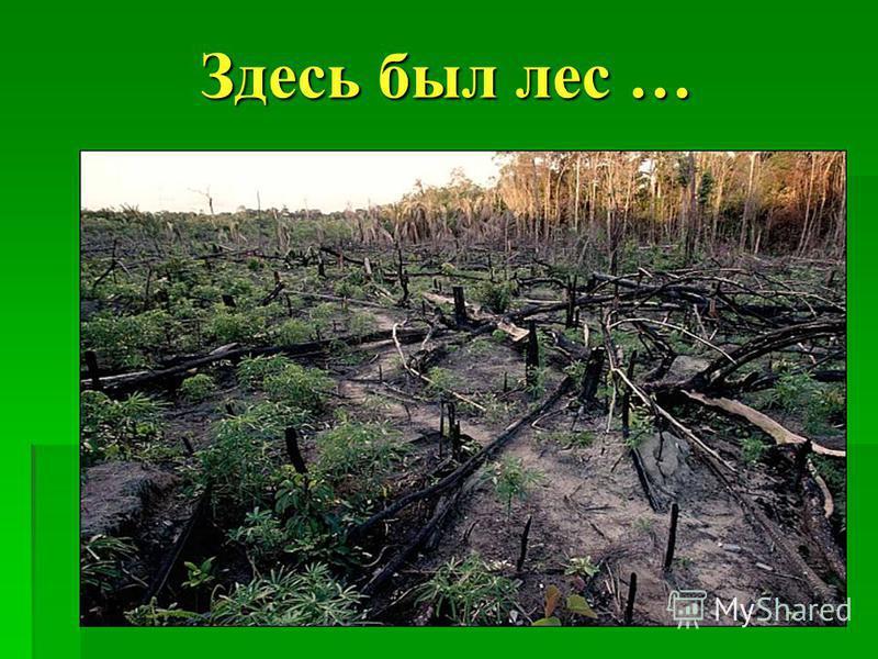 Здесь был лес …