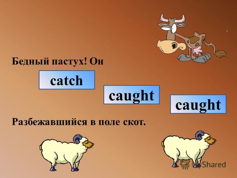 Бедный пастух! Он Разбежавшийся в поле скот. catch caught