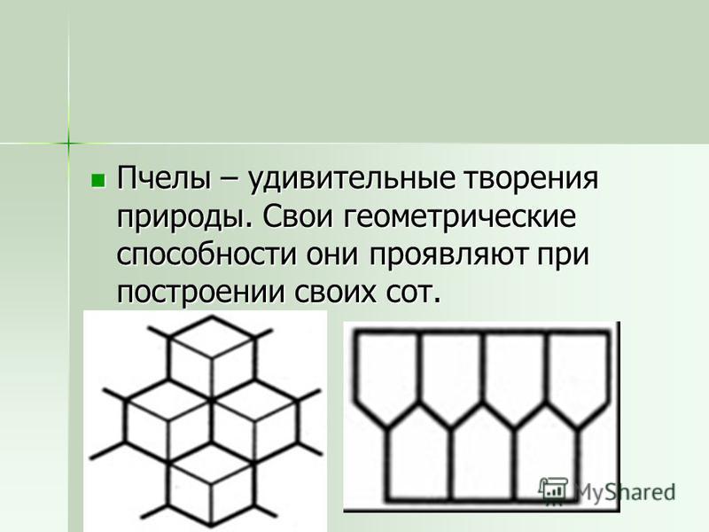 Пчелы – удивительные творения природы. Свои геометрические способности они проявляют при построении своих сот. Пчелы – удивительные творения природы. Свои геометрические способности они проявляют при построении своих сот.