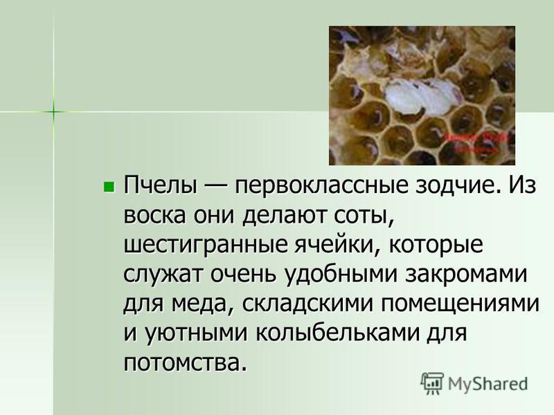 Пчелы первоклассные зодчие. Из воска они делают соты, шестигранные ячейки, которые служат очень удобными закромами для меда, складскими помещениями и уютными колыбельками для потомства. Пчелы первоклассные зодчие. Из воска они делают соты, шестигранн