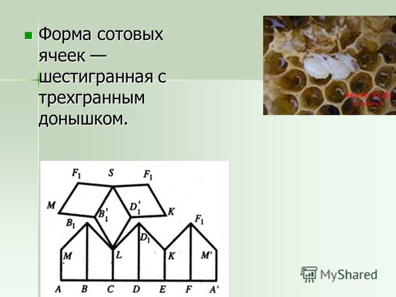 Форма сотовых ячеек шестигранная с трехгранным донышком. Форма сотовых ячеек шестигранная с трехгранным донышком.
