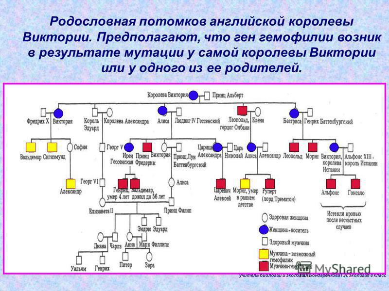 Родословная потомков английской королевы Виктории. Предполагают, что ген гемофилии возник в результате мутации у самой королевы Виктории или у одного из ее родителей. учитель биологии и экологии БондаренковаТ.Н. экология 8 класс