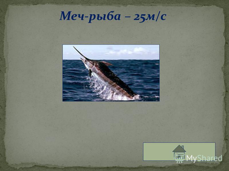 Меч-рыба – 25 м/с