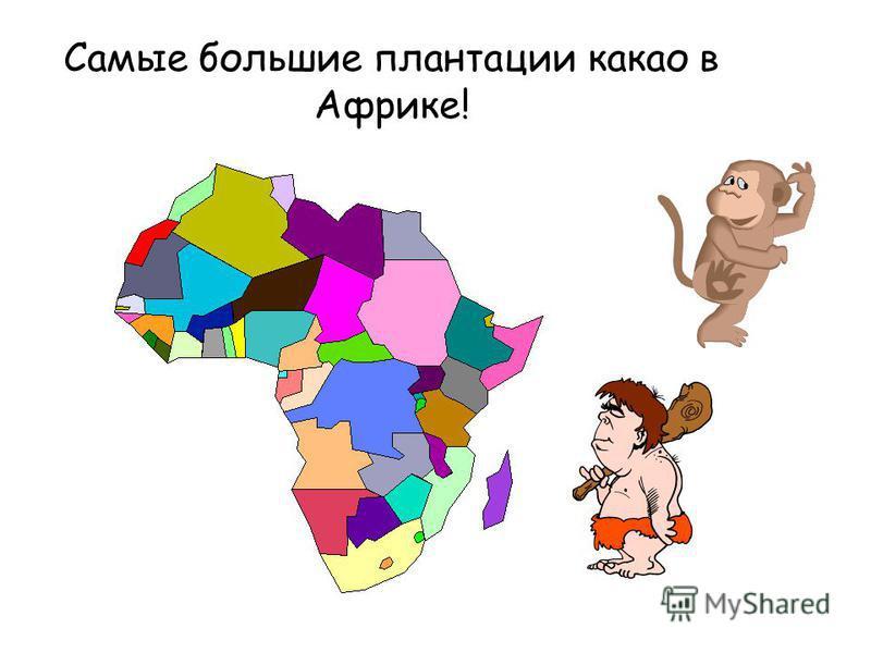 Самые большие плантации какао в Африке!