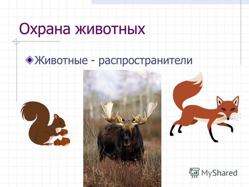Охрана животных Животные - распространители