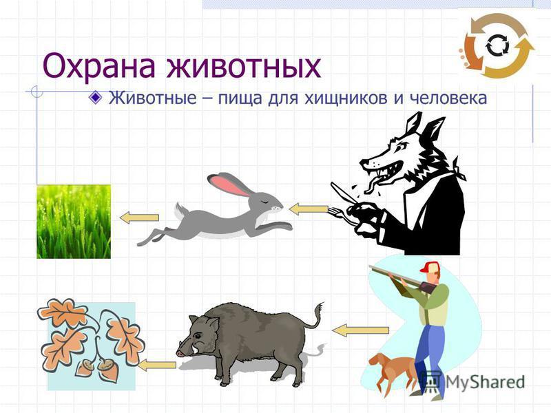 Охрана животных Животные – пища для хищников и человека