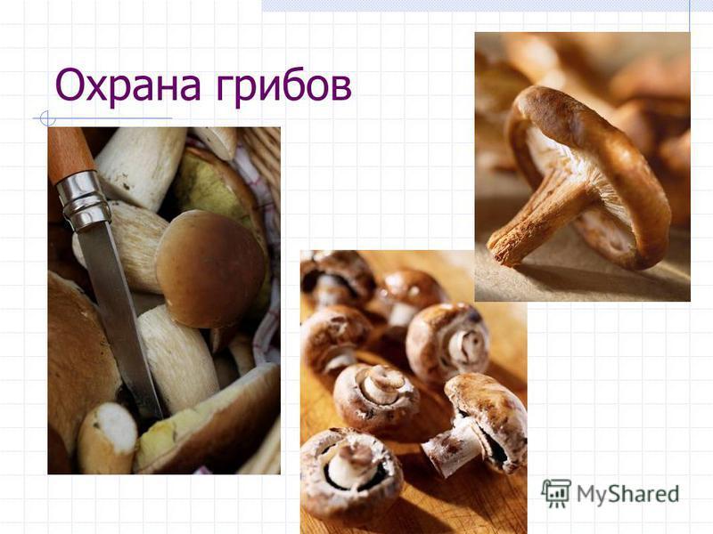 Охрана грибов