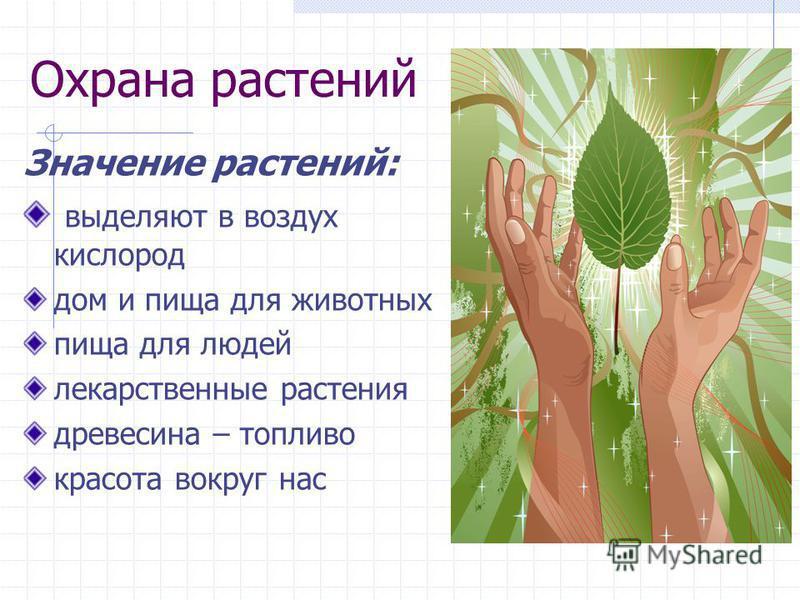 Охрана растений Значение растений: выделяют в воздух кислород дом и пища для животных пища для людей лекарственные растения древесина – топливо красота вокруг нас