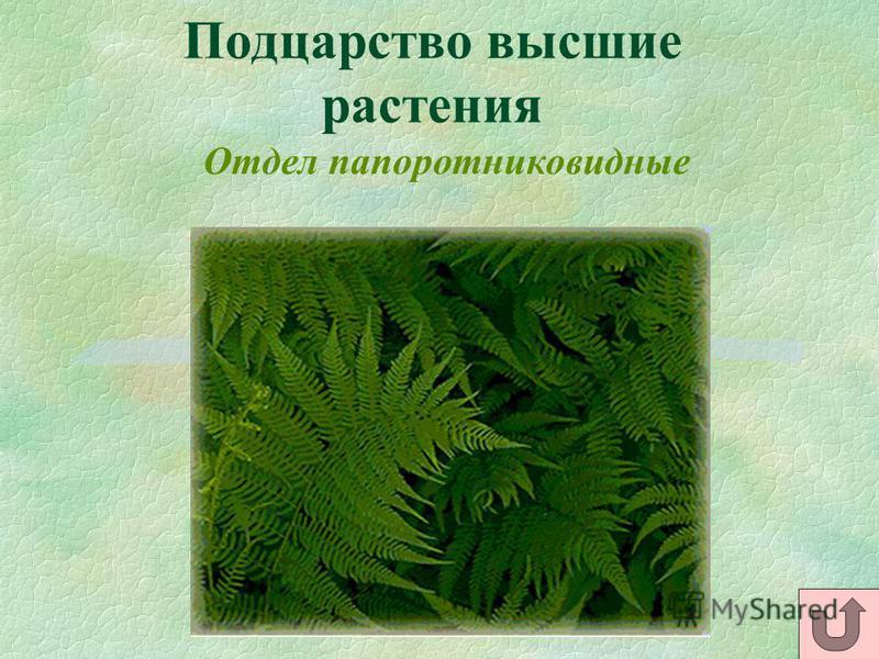 Подцарство высшие растения Отдел папоротниковидные