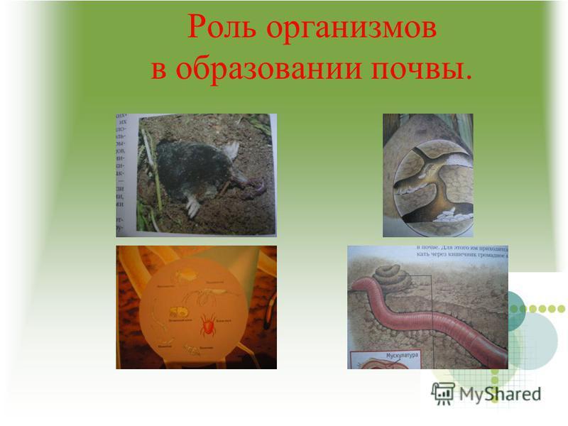 Роль организмов в образовании почвы.