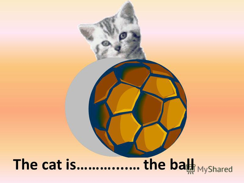 behind The cat is………....… the ball