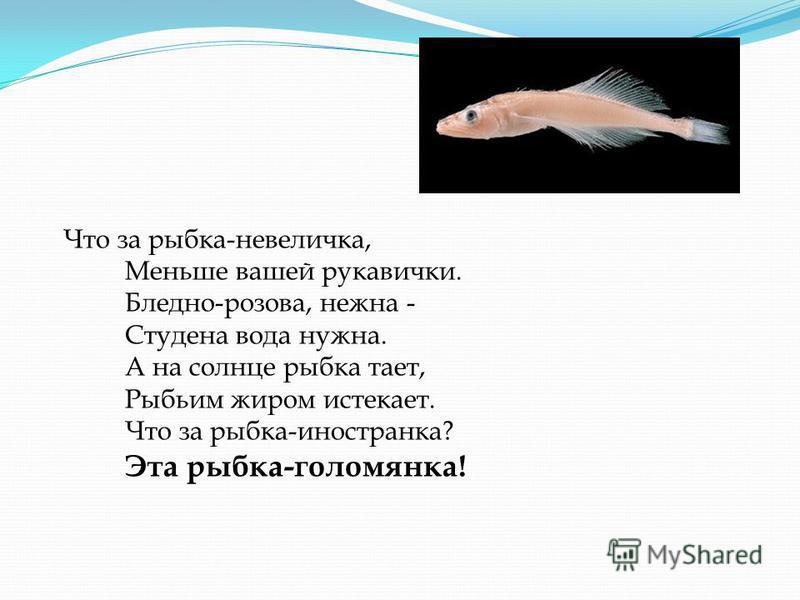 Что за рыбка-невеличка, Меньше вашей рукавички. Бледно-розова, нежна - Студена вода нужна. А на солнце рыбка тает, Рыбьим жиром истекает. Что за рыбка-иностранка? Эта рыбка-голомянка!