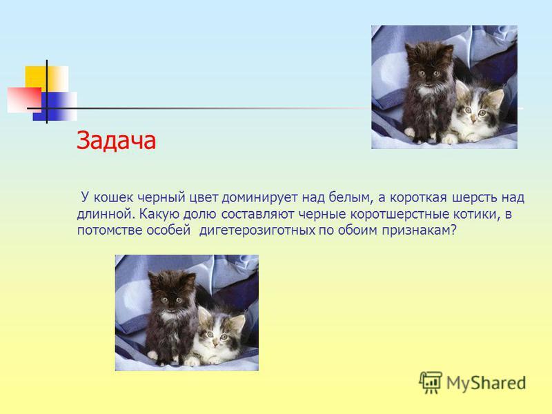 У кошек черный цвет доминирует над белым, а короткая шерсть над длинной. Какую долю составляют черные короткошерстные котики, в потомстве особей дигетерозиготных по обоим признакам? Задача