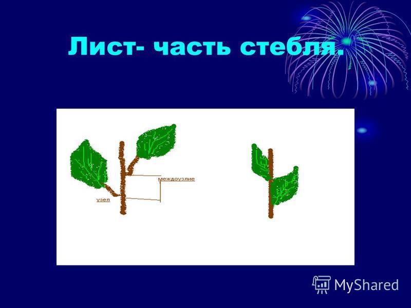Лист- часть стебля.