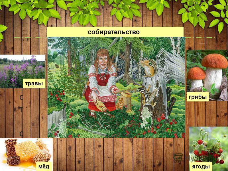 5 Текст слайда Текст слайда собирательство грибы ягоды мёд травы