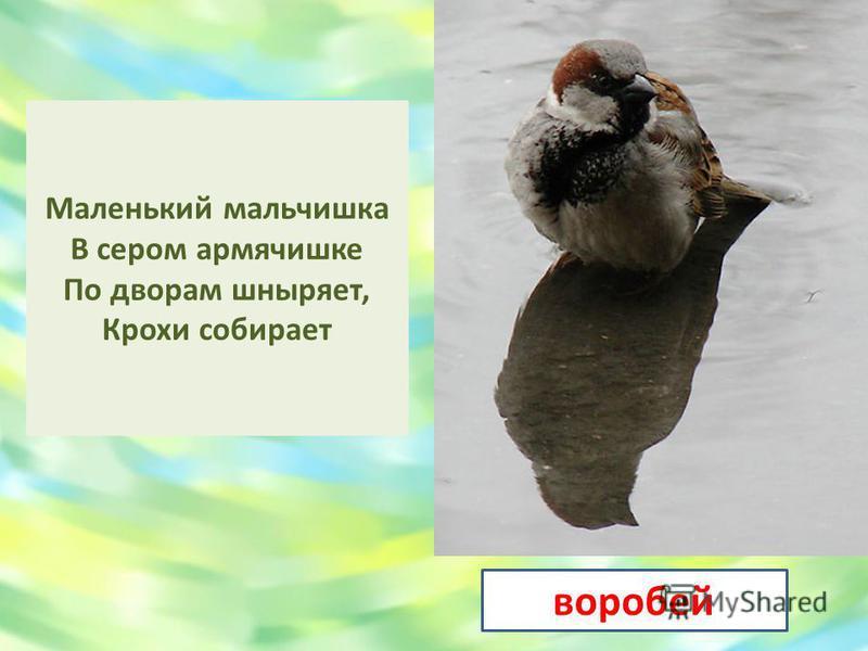ласточка Угадай – ка, что за птичка Тоненькая невеличка? Беленькая с живота, Хвост раздвинут в два хвоста?