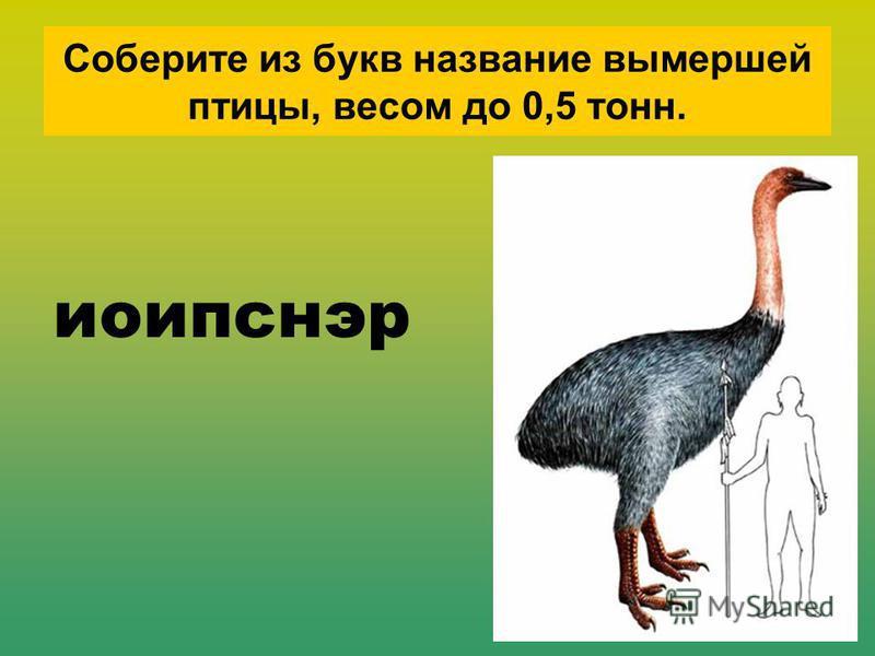 Соберите из букв названии вымершей птицы, весом до 0,5 тонн. иоипснэр