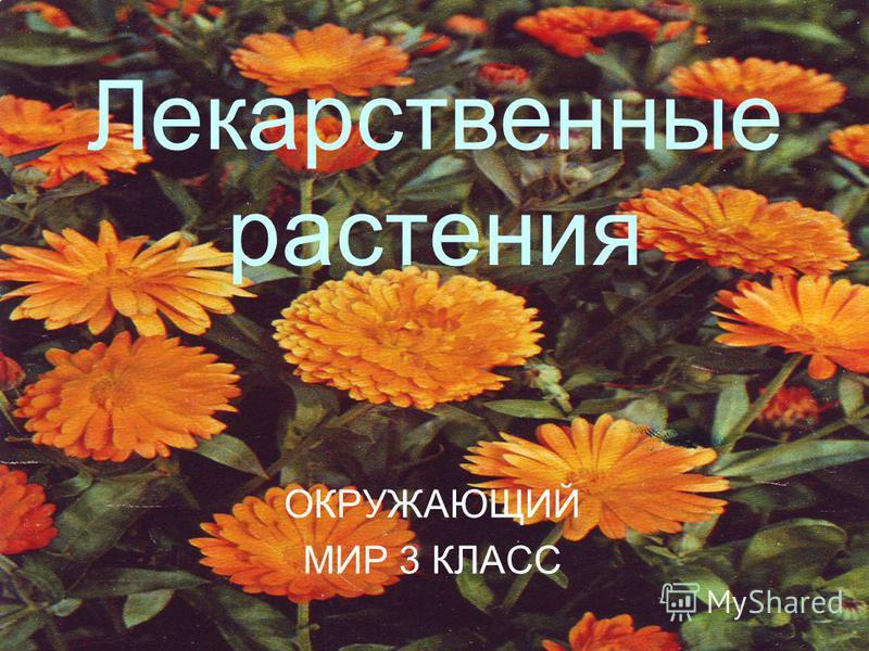 Лекарственные растения ОКРУЖАЮЩИЙ МИР 3 КЛАСС