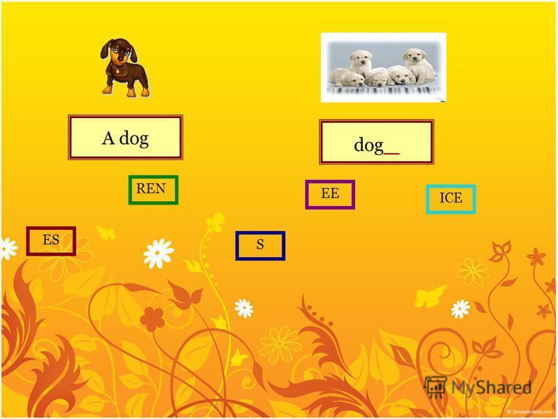 A dog dog _ S ES REN EE ICE