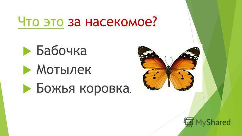 Что это за насекомое? Что это Бабочка Мотылек Божья коровка.