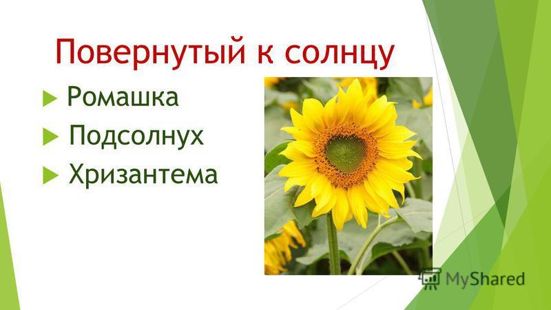 Повернутый к солнцу Ромашка Подсолнух Хризантема