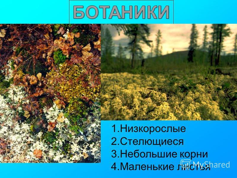 1. Низкорослые 2. Стелющиеся 3. Небольшие корни 4. Маленькие листья