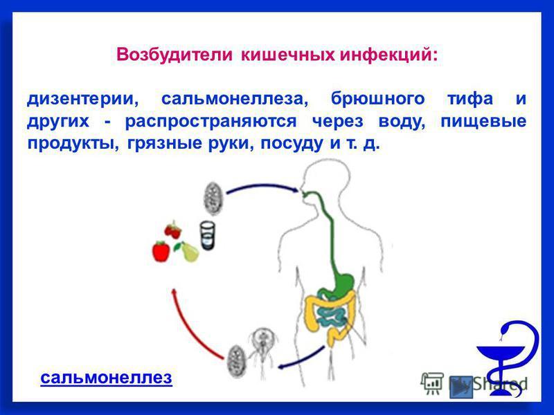 Возбудители кишечных инфекций: дизентерии, сальмонеллеза, брюшного тифа и других - распространяются через воду, пищевые продукты, грязные руки, посуду и т. д. сальмонеллез