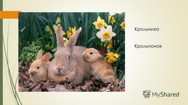 Крольчиха Крольчонок