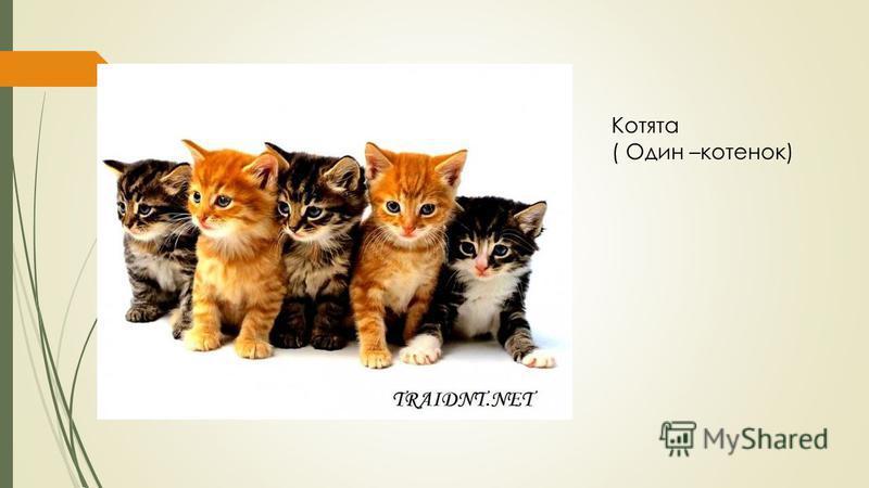 Котята ( Один –котенок)