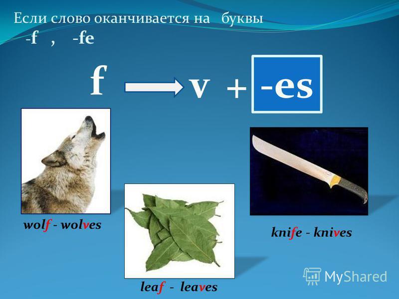 Если слово оканчивается на буквы - f, -fe -es wolf - wolves knife - knives leaf - leaves f v+