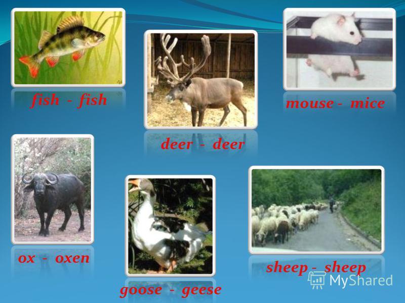 fish - fish ox - oxen goose - geese deer - deer mouse - mice sheep - sheep