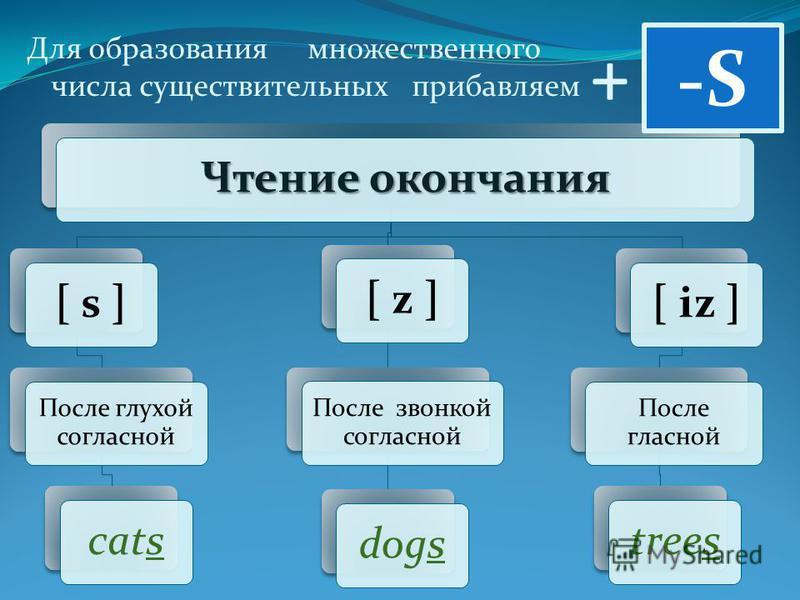 + Для образования множественного числа существительных прибавляем Чтение окончания [ s ] После глухой согласной cats[ z ] После звонкой согласной dogs[ iz ] После гласной trees -S-S
